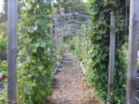 Vertical Gardening Arbor