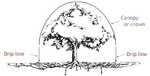 tree_dripline