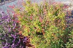 Livermore Garden OPL 250